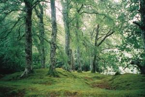 Staffordshire Forest  High Round